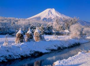 忍草の雪景色と富士山の写真素材 [FYI02076976]