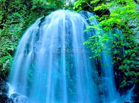 新緑の不動滝の写真素材 [FYI02077011]