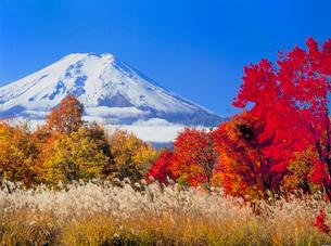 紅葉と富士山の写真素材 [FYI02077029]