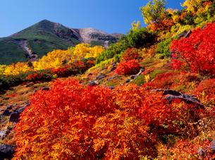 乗鞍岳位ヶ原のナナカマドと剣ヶ峰の写真素材 [FYI02077083]