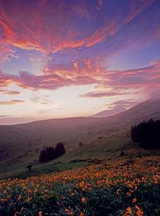 霧ケ峰高原 車山肩のニッコウキスゲと朝焼けの写真素材 [FYI02077129]