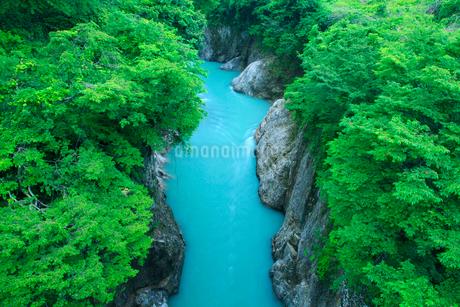 手取峡谷の新緑の写真素材 [FYI02077161]