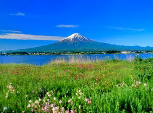 花咲く河口湖と富士山の写真素材 [FYI02077214]