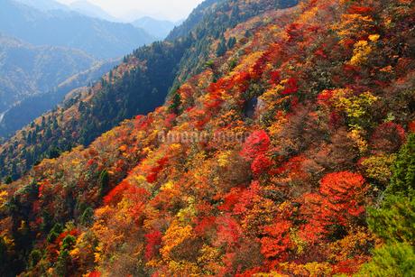 御在所岳の紅葉の写真素材 [FYI02077252]