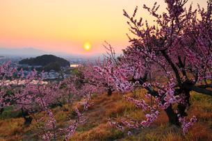 山の辺の道 桃と夕日の写真素材 [FYI02077331]