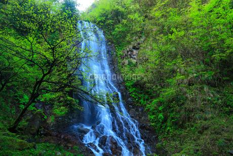 霧降りの滝の写真素材 [FYI02077611]