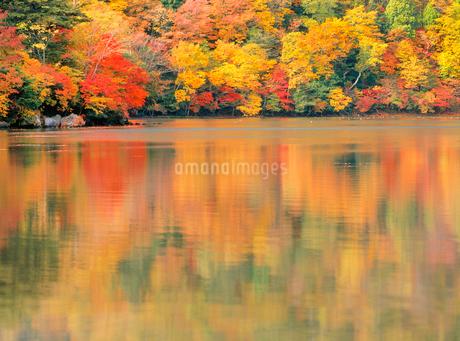 湯ノ湖の紅葉の写真素材 [FYI02077652]