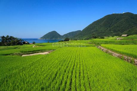 袖志の棚田と経ヶ岬の写真素材 [FYI02077659]