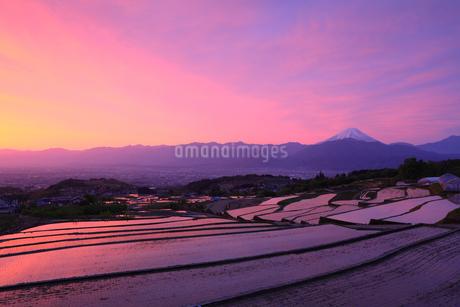 棚田より甲府盆地と朝焼けの富士山の写真素材 [FYI02077675]
