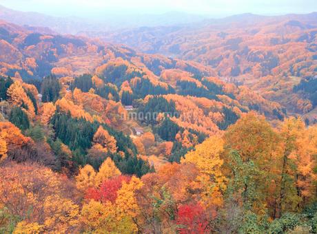 鬼無里・大望峠の紅葉の写真素材 [FYI02077677]