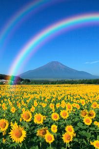 二重の虹架かる夏の富士山とヒマワリ畑の写真素材 [FYI02077878]