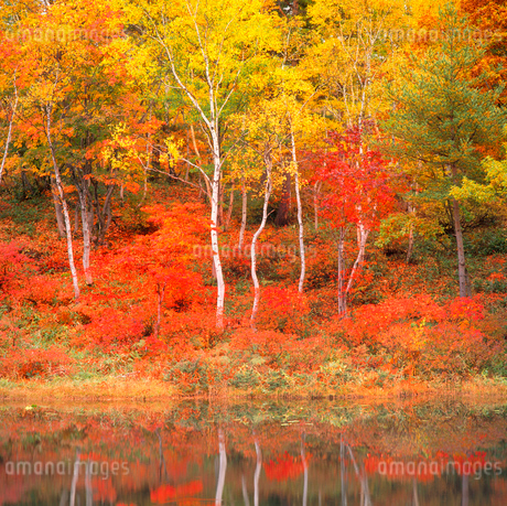 志賀高原 一沼の紅葉の写真素材 [FYI02077924]