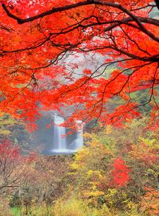 紅葉の鐘山の滝の写真素材 [FYI02077939]