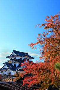 彦根城とカエデ紅葉の写真素材 [FYI02077970]