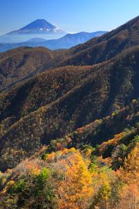 丸山林道より紅葉と富士山の写真素材 [FYI02078003]