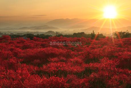 葛城古道 ヒガンバナと朝日の写真素材 [FYI02078117]
