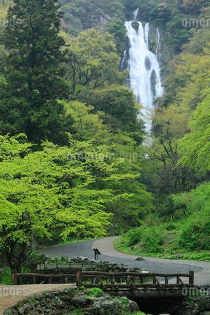 神庭の滝と新緑の写真素材 [FYI02078138]