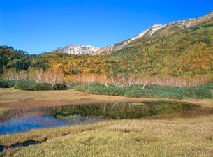 紅葉の栂池自然園から白馬岳を望むの写真素材 [FYI02078207]