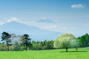 ヤマナシの木と富士山の写真素材 [FYI02078254]