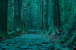 熊野古道 大門坂の写真素材 [FYI02078265]