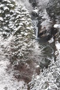 霧氷の横谷渓谷・おしどり隠しの滝の写真素材 [FYI02078360]
