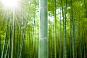 竹林と木漏れ日の写真素材 [FYI02078408]