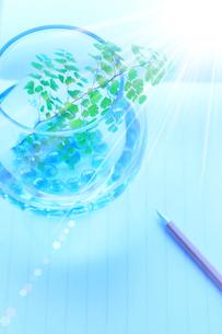 アジアンタムとビー玉 便せん ペン 光の写真素材 [FYI02078524]
