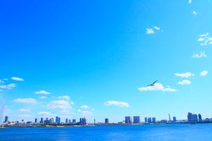 東京港より東京の街並と鳥の写真素材 [FYI02078580]