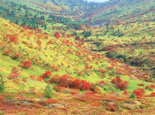 山田峠よりナナカマドの紅葉の写真素材 [FYI02078605]