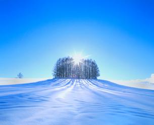雪原のカラマツ林と太陽の写真素材 [FYI02078767]