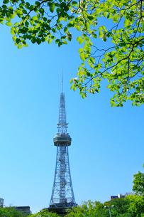 名古屋テレビ塔と新緑の写真素材 [FYI02078956]