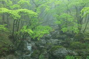 大台ケ原の新緑の写真素材 [FYI02079100]