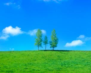 親子の木と牧草地の写真素材 [FYI02079391]