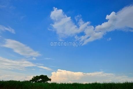 緑の草原と雲の写真素材 [FYI02079477]