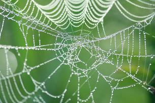 蜘蛛の巣 尾瀬ケ原の夏の写真素材 [FYI02079478]