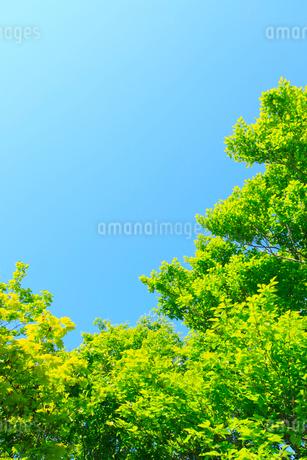新緑と青空の写真素材 [FYI02079522]