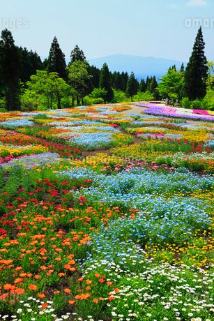 久住高原 くじゅう花公園 の写真素材 [FYI02079538]