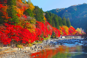 香嵐渓 紅葉と待月橋の写真素材 [FYI02079546]
