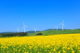 ナノハナ畑と風力発電の風車の写真素材 [FYI02079585]