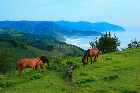 都井岬から望む恋ヶ浦と岬馬の写真素材 [FYI02079636]