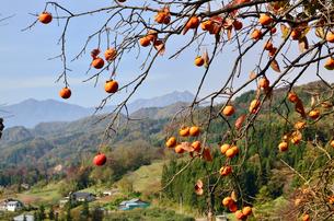里山と柿の写真素材 [FYI02079688]