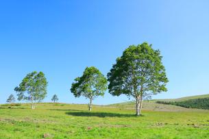 緑樹とレンゲツツジの写真素材 [FYI02079777]
