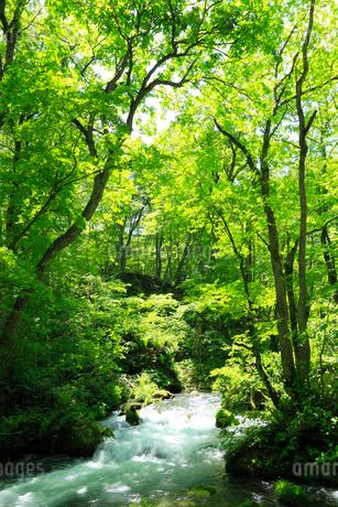 新緑の奥入瀬渓流の写真素材 [FYI02079791]
