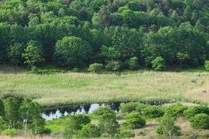 霧ヶ峰高原 新緑の池のくるみ湿原とレンゲツツジの写真素材 [FYI02079868]