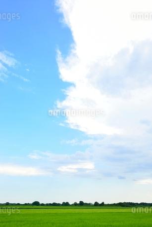 緑の稲田と雲の写真素材 [FYI02079908]
