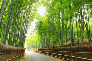 竹の径の写真素材 [FYI02079922]