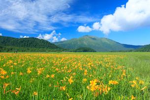 尾瀬ケ原 至仏山とニッコウキスゲの写真素材 [FYI02079934]