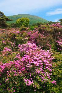 えびの高原 つつじヶ丘のミヤマキリシマと韓国岳の写真素材 [FYI02080018]