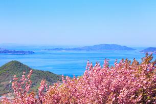 ボタンザクラと瀬戸内海の写真素材 [FYI02080152]