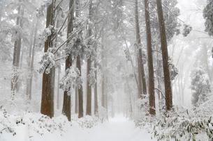 金剛山の樹氷と登山道の写真素材 [FYI02080303]